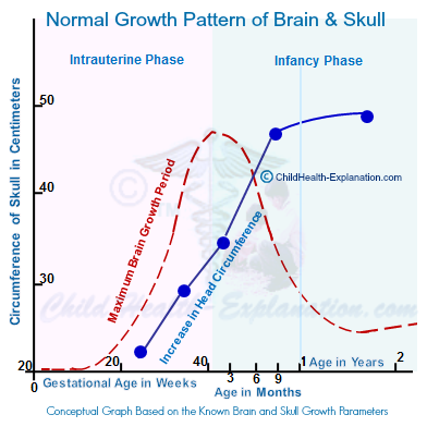 Prenatal and Infancy Brain Development