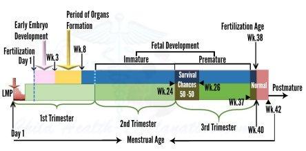 Fetal Development and Viability