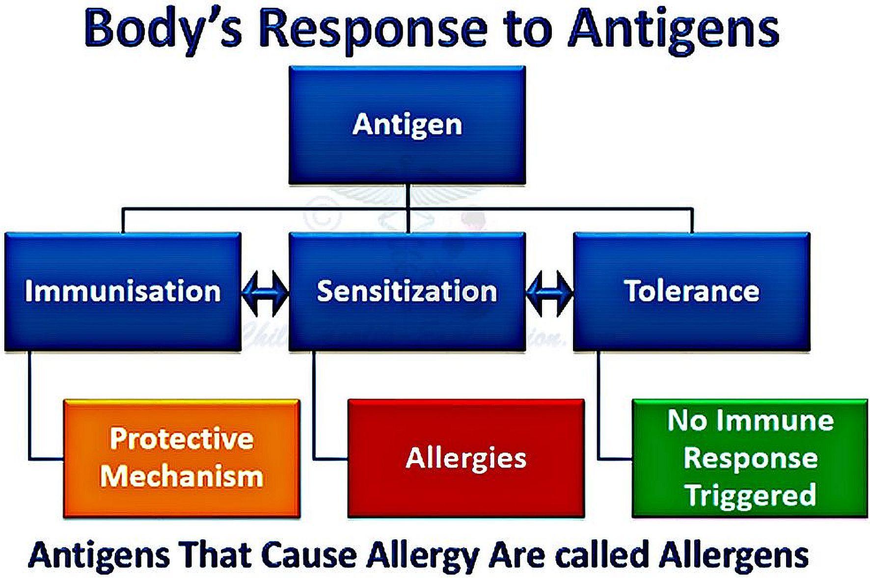 Body's Response to Antigens