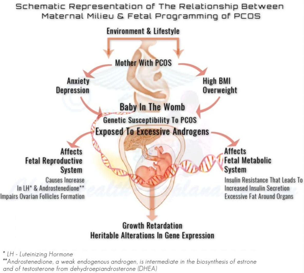 Fetal Programming Of PCOS