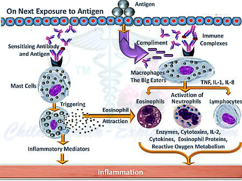 Immune Reaction on Subsequent Exposure to Antigen