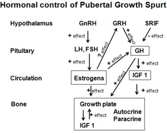 Number of Hormones Play Part in Growth Spurt  of Puberty