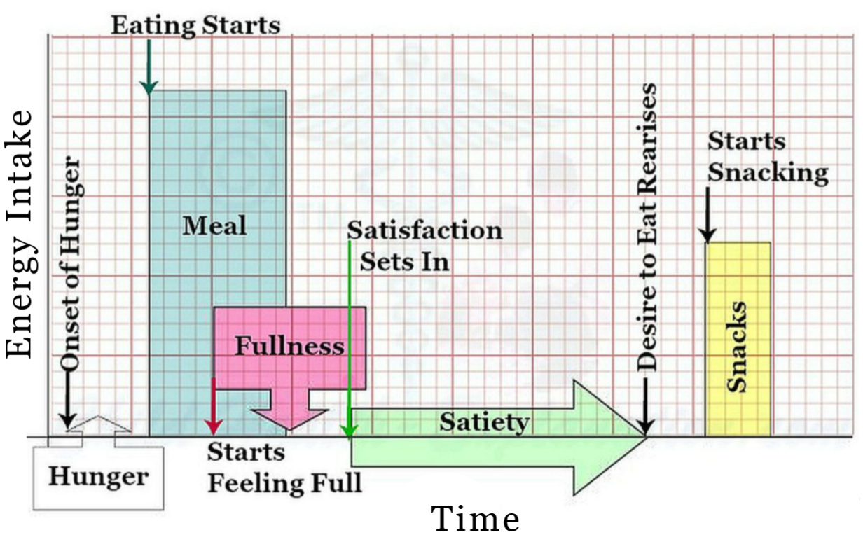 Awareness Of Hunger & Satiety, The Feeling Of Fullness After A Meal