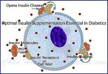 Glucose Metabolism in Cells