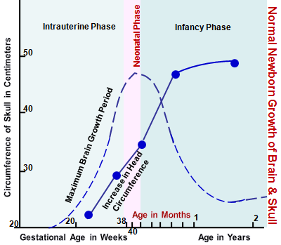 Newborn Brain Growth: Increase in Head circumference Reflects Brain Growth