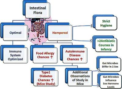 Preventive Role of Gut Flora in Autoimmune Diseases and Food Allergies