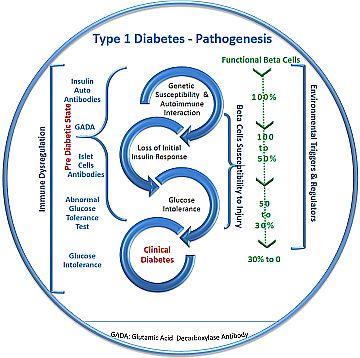 Type 1 Diabetes Pathogenesis